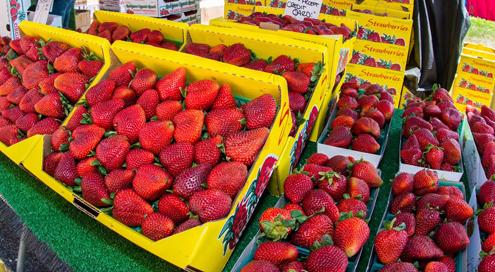 2015-farmers-market-strawberries-300dpi