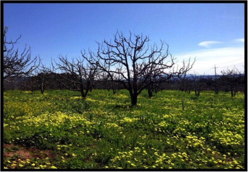 Apple-Orchard-Aptos-Ca