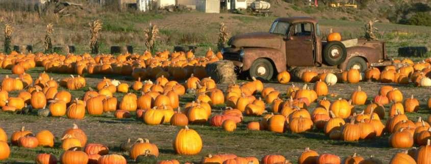 pumpkinField