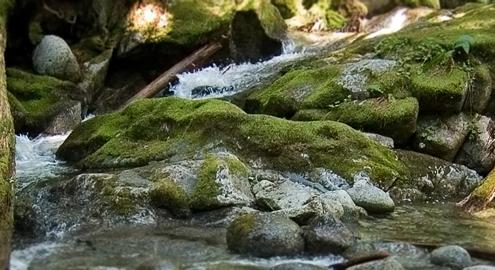 stevens_creek